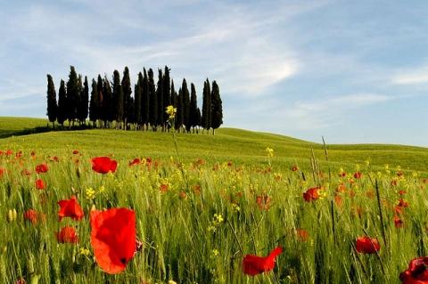 Strada dei cipressi, Val d'Orcia, Toscana